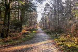 Martin Jones Photography - Off Woodlands rd, Ashurst